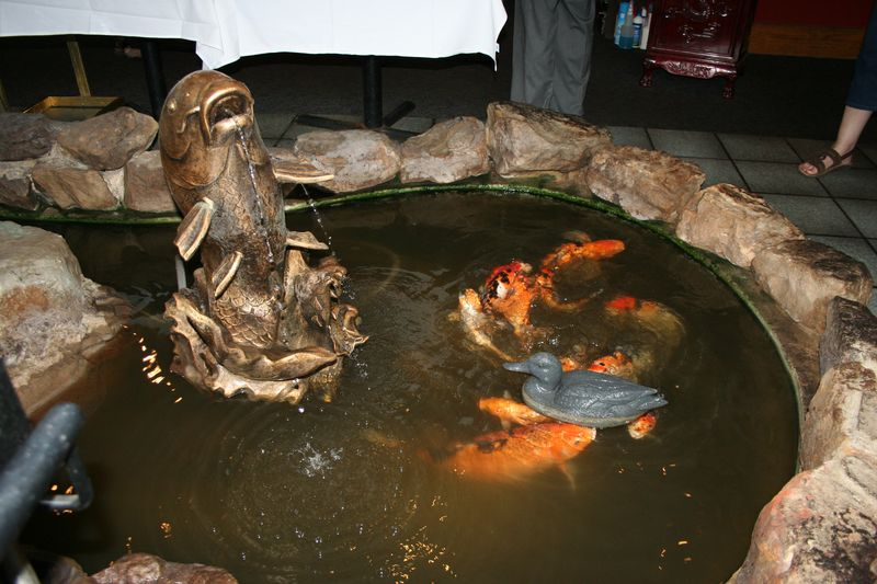 The Koi pond, mid feeding frenzy, fish food had just been tossed to the fish.