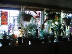 The WALL of tropical plants and stained glass Tiki- one of the best treatments for bars with windows I've ever seen! Seattle outside, Tiki inside.