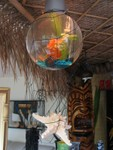 A goldfish swims happily past a sunken Mr. Bali Hai while a massive Tiki looks on.