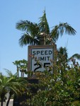 And a final tropical traffic sign, surrounded by overgrowth.